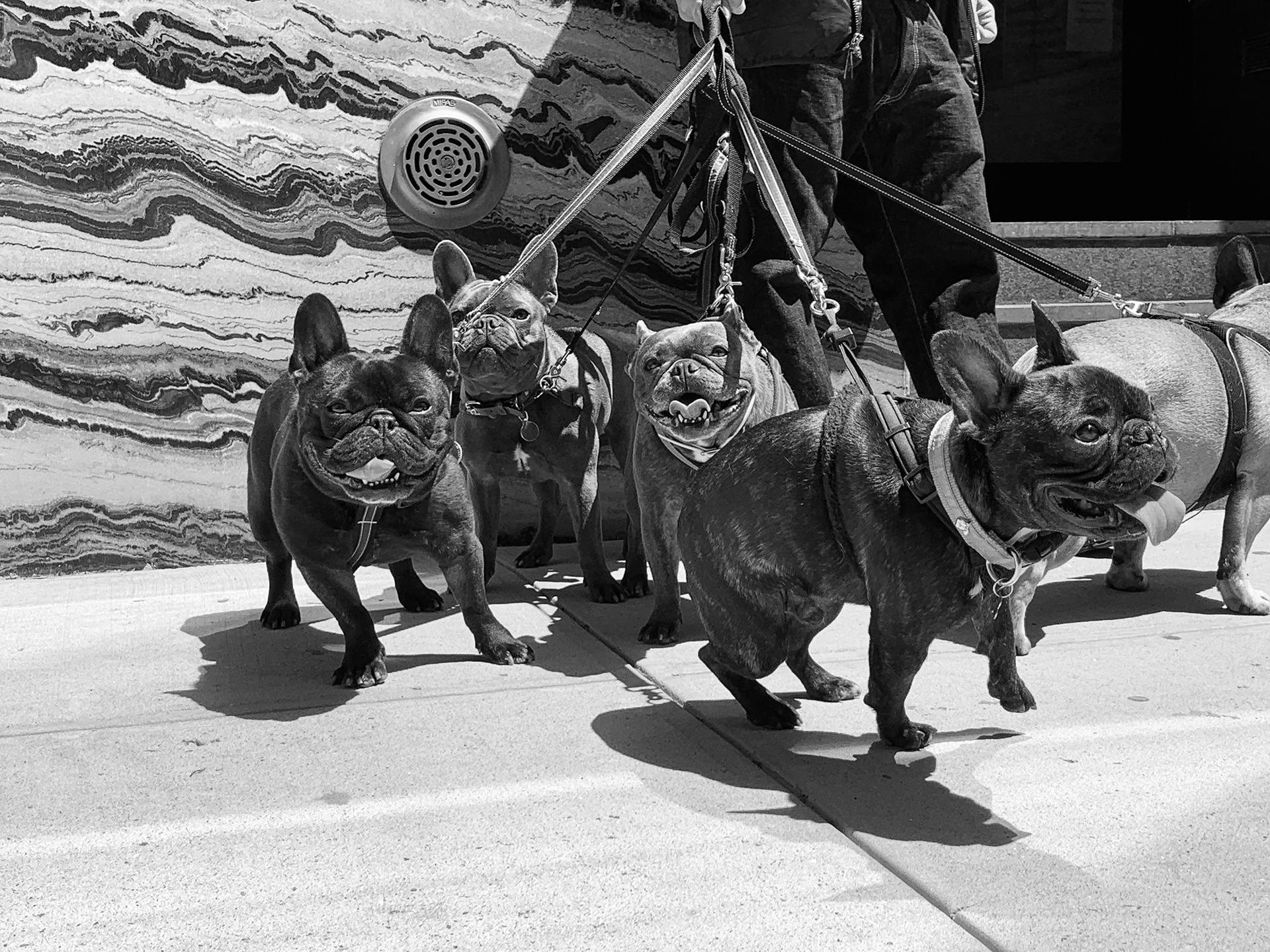 Mason Detrani, Untitled (Dogs, NYC), 2021