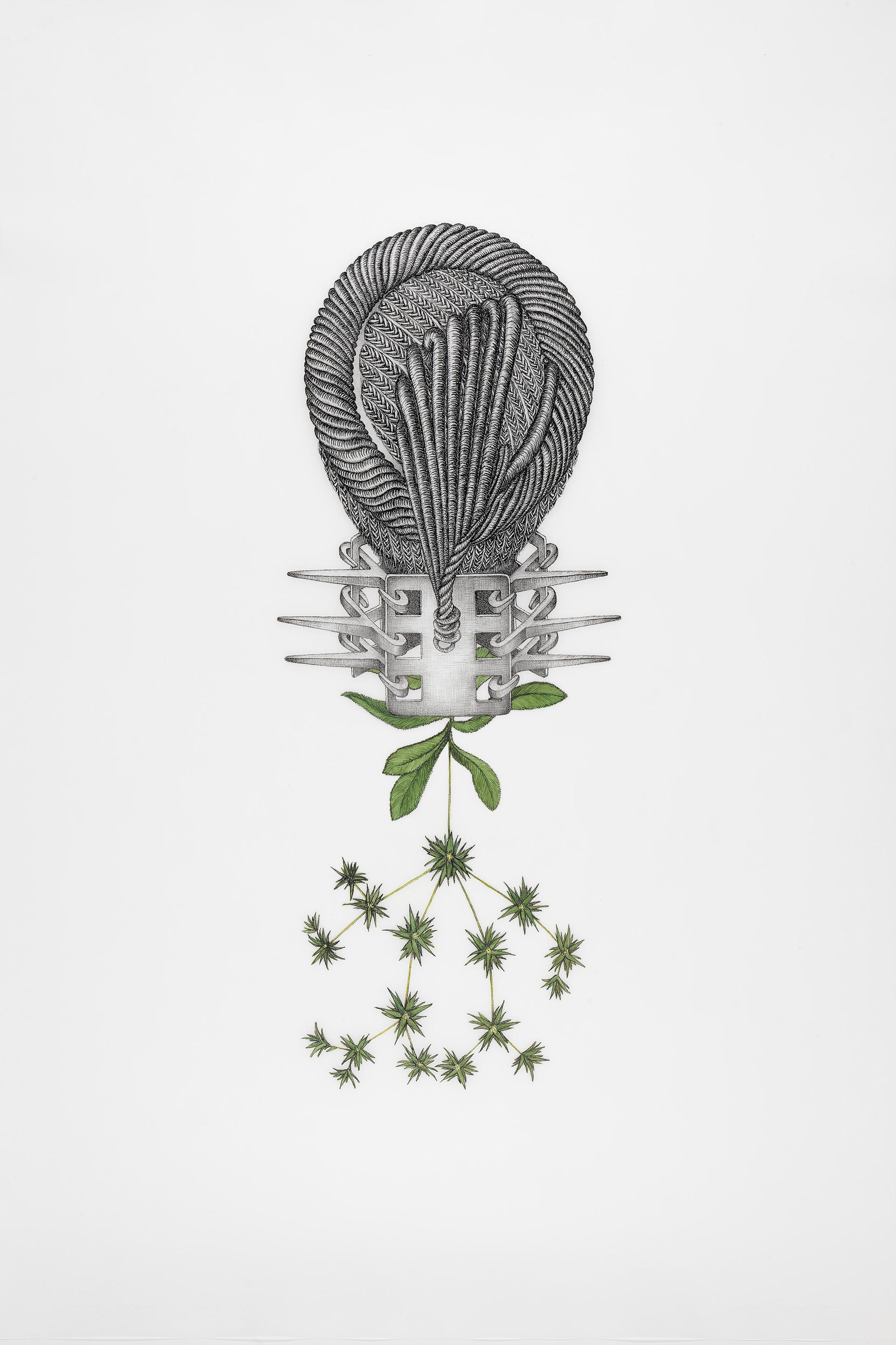 Joscelyn Gardner, Eryngium foetidum (Prue), 2009, hand-colored lithograph on frosted mylar, Yale Center for British Art, Friends of British Art Fund, © Joscelyn Gardner
